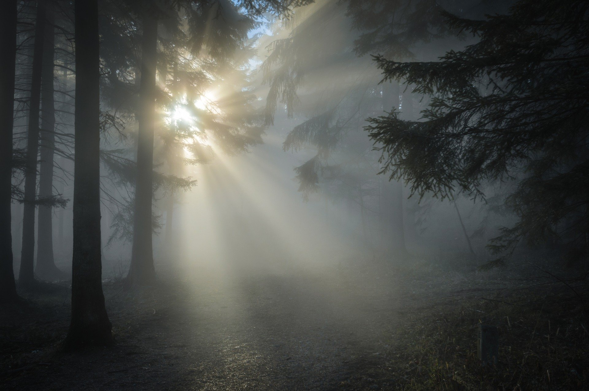 Accepting life's challenges depicted by light thru trees