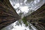 trees depicting gratitude